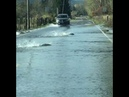 Like a Fish Out of Water: Heavy Rains Carry Salmon Across the Road Near the Skokomish River