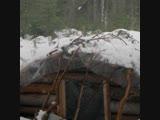 Медведи на Новой Земле устроили берлоги в блиндажах