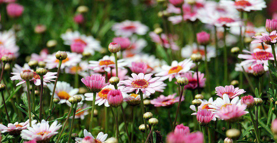 Конкурс на самый оригинальный цветник у дома стартовал в Некрасовке