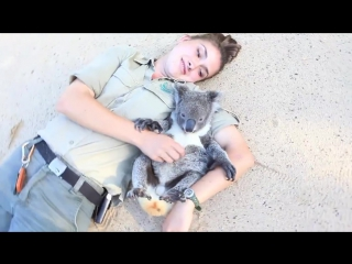 Детенышу коалы чешут пузико