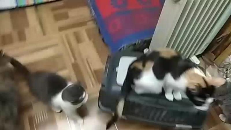 Стеша приехала в изолятор