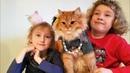 Расчёсывают, наряжают кошку Бьюшу,comb and dress up the cat