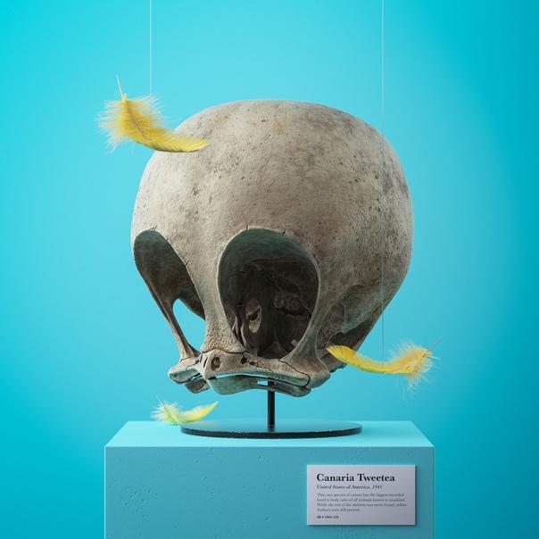 Диснеевская палеонтология. Пражский художник увековечивает некоторые из своих любимых мультфильмов серией убедительных окаменелостей, которые дают необычный взгляд на скелеты анимационных