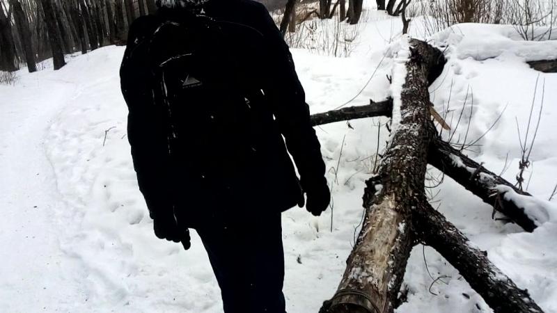 лес namber two
