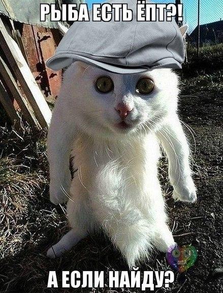Кошачий юмор - Страница 5 HE51HFpGQNk