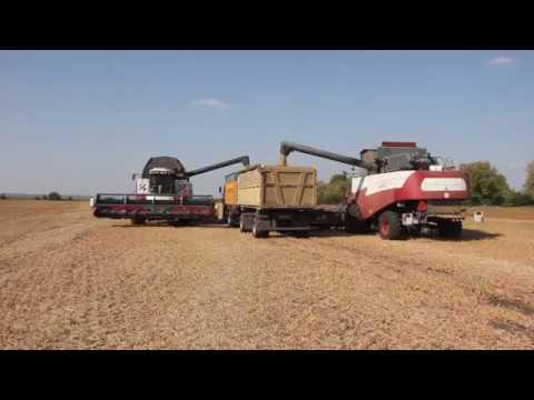 Новооскольские аграрии приступили к уборке технических культур