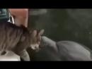 Приколы с Котами 2018 - Смешные коты и кошки 2018 - ТЕСТ НА ПСИХИКУ