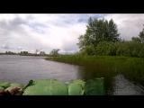Алигаторы блин)))