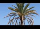 На площадке проекта Le Blanc, Marbella/Sierra Blanca/Golden Mile