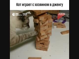 Котик играет в Дженгу