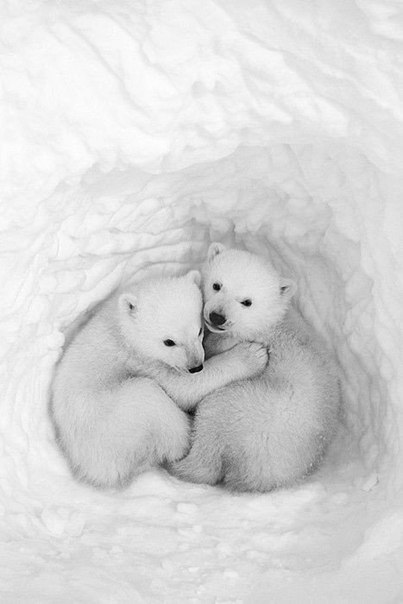 Медвежата в снежной берлоге.