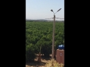 Цитрусовый сад, Агадир - Марокко, 2017