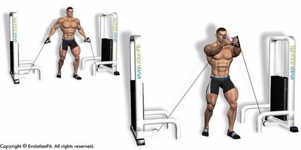 Качаем грудные мышцы