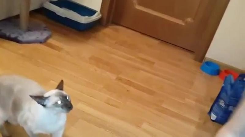 Дерзкая кошка