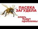Оттепель Прослушка ульёв с пчёлами Неправильный гул