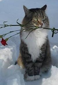 Саша Силинская, 14 декабря , Тарногский Городок, id204928260