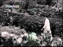 Phool Tumhe bheja hai khat mein 1968