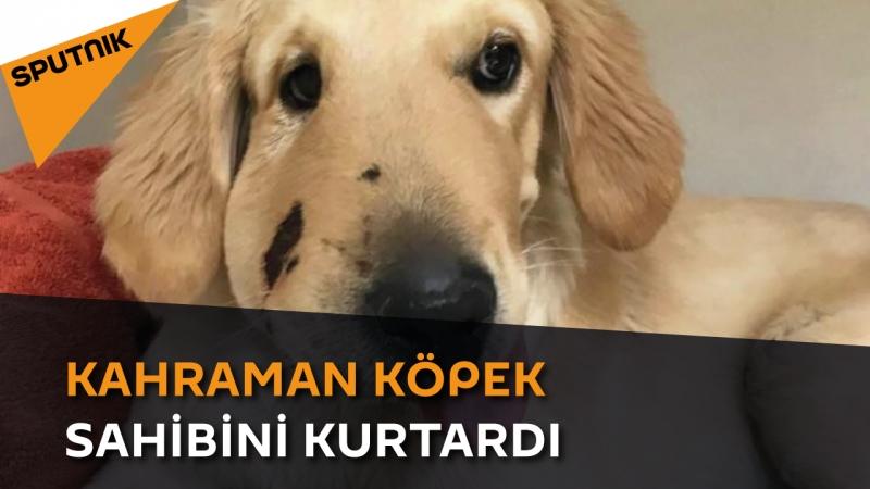 Kahraman köpek sahibini kurtardı