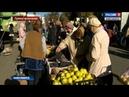 Фермеры привезли в Новосибирск продукцию выращенную своими руками