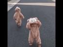 Иностранные болельщики убедились медведи в России ходят таки по улицам