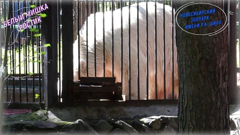 Мишка Ростик 12 15 обед по расписанию