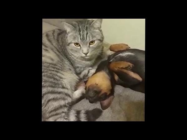 Кот усыновил Пса / Cat adopt a dog