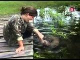 BBC Мир природы Санчо детеныш выдры