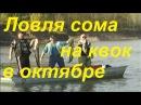 """Ловля сома на квок осенью в октябре на Ахтубе видео """"Рыболов Элит (Elite)"""""""