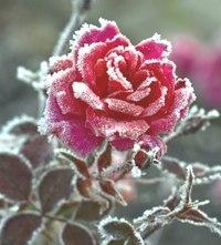 Зима... Морозная и снежная, для кого-то долгожданная, а кем-то не очень любимая, но бесспорно – прекрасная.  SbgLfOOeNm0