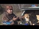 Состязания гончих псов проходят в Красноармейском районе