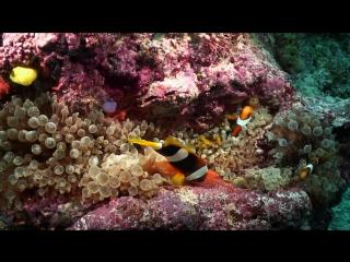 Коралловые рифы. Соломоновы Острова.