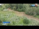 Миллион-за-борщевик-избавиться от ядовитого сорняка попробуют с помощью штрафов - Россия-24