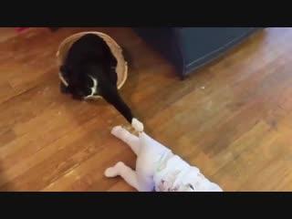 Дети и кошки это всегда смешно.