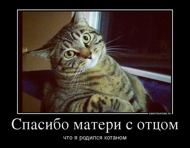 Черная спальня мдф на украине фото залез