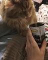 sasha_lialyshkina video
