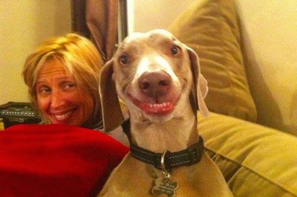 Это надо знать! ИНТЕРЕСНЫЕ факты о собаках QgwsGaxVJQg