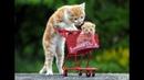 Забавные котята и кошки - 😻 Милахи коты 🐈 - Чудесное пушистое видео!
