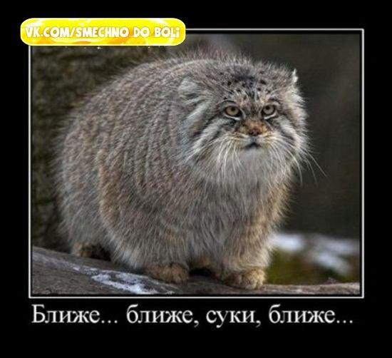 http://cs410627.vk.me/v410627063/2ec3/rx0QuG7O5zc.jpg