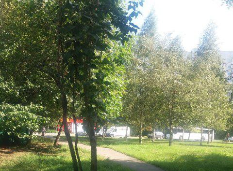 Во дворе на Корнейчука провели санитарную обрезку дерева