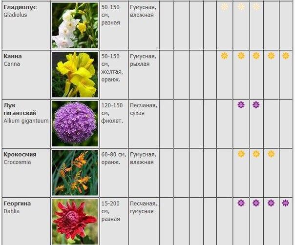 Глубина посадки луковичных цветов таблица