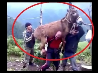 Man Shows His Friends How Strong He Really Is, Russian Man Lifts Donkey And Boy On His Shoulders