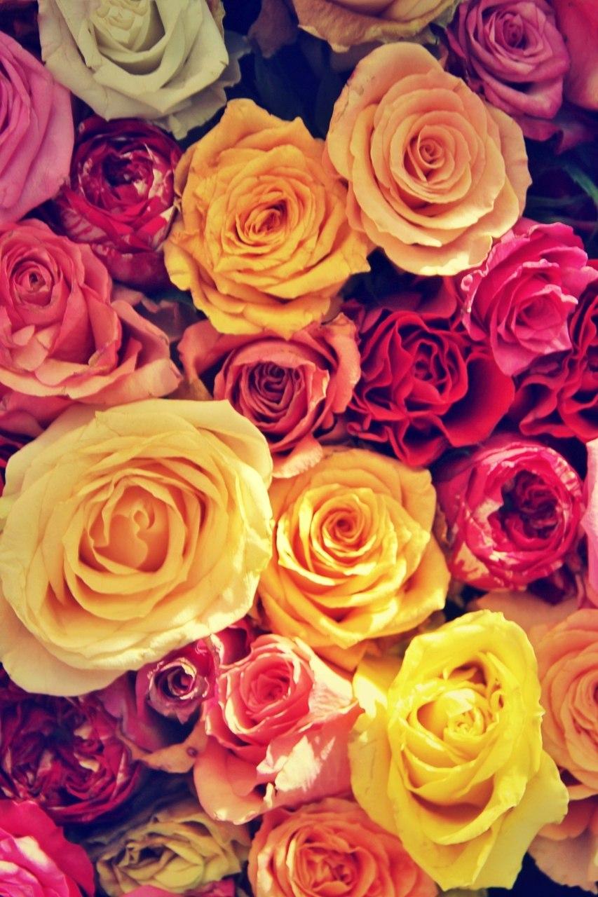 Красивые фото на аву в ватсапе розы