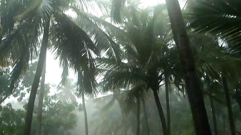 Тропический ливень в Гоа.Июнь 2018.Tropical rain in Goa.