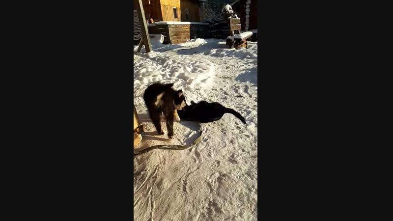 Щенок Урал и кот Кузя из монастырского семейства скита Актай. Актайские забавы.😊