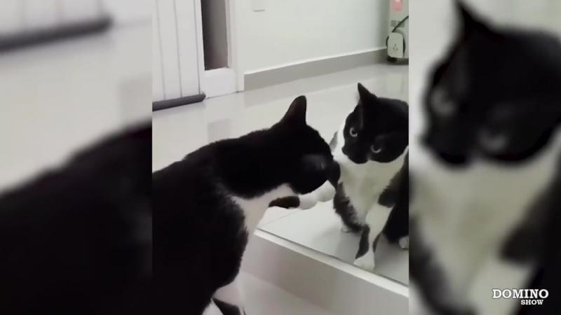 [Domino Show] КОГДА ЧТО ТО ПОШЛО НЕ ТАК