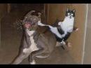 Кошка защищает ребенка от собаки