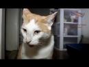 Самые смешные видео про котов Супер приколы! Выпуск 6