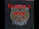 Stray - Lp Suicide - Tr 2 - Nature's way - Del Bronham, Steve Gadd, Ritchie Cole, Gary Giles