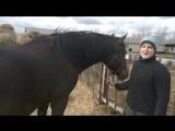 Чистим копыта лошадке Мирабелле