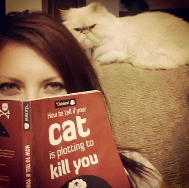 Кажется эти коты, что то задумали!)))